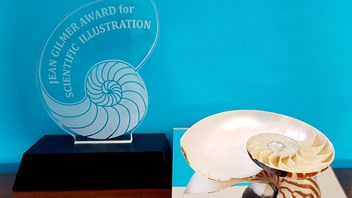 The Jean Gilmer Award is a beautiful Nautilus shell