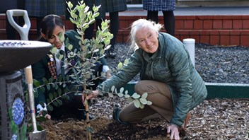 Dr Jane Goodall plants a feijoa tree